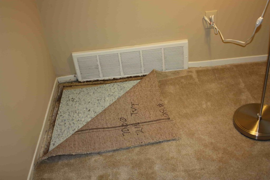 Remove Mildew from Your Walls and Carpet-min